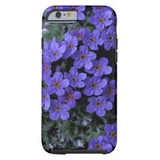 USA, Alaska National Wildlife Refuge (ANWR). iPhone 6 Case