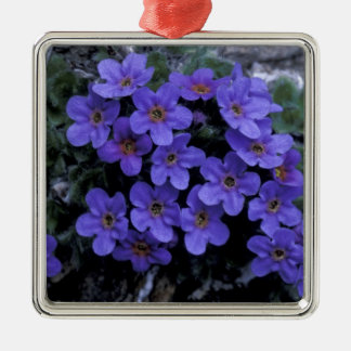 USA, Alaska National Wildlife Refuge (ANWR). Christmas Ornament