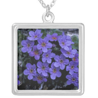 USA, Alaska National Wildlife Refuge (ANWR). Silver Plated Necklace