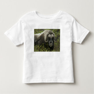 USA, Alaska, Nome. Close-up of musk ox Toddler T-Shirt