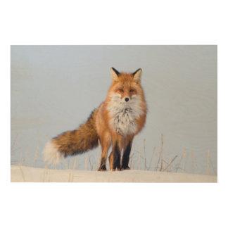 USA, Alaska, North Slope, 1002 Area 2 Wood Canvas