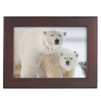 USA, Alaska, North Slope, 1002 Area 3 Keepsake Box