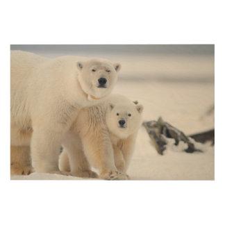 USA, Alaska, North Slope, 1002 Area 3 Wood Canvas