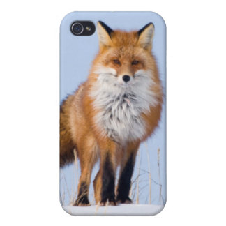 USA, Alaska, North Slope, 1002 Area iPhone 4/4S Cover
