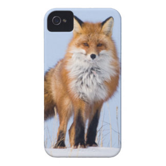 USA, Alaska, North Slope, 1002 Area iPhone 4 Cases