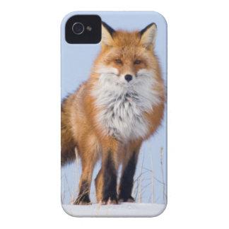 USA, Alaska, North Slope, 1002 Area iPhone 4 Cover