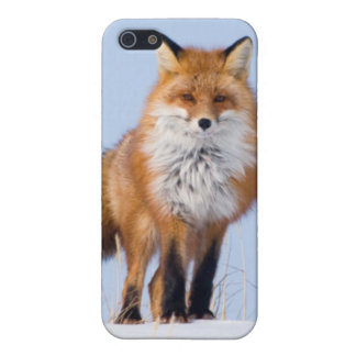 USA, Alaska, North Slope, 1002 Area iPhone 5/5S Cases