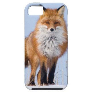 USA, Alaska, North Slope, 1002 Area iPhone 5 Covers