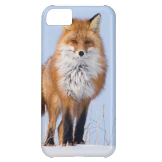 USA, Alaska, North Slope, 1002 Area iPhone 5C Case