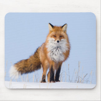 USA, Alaska, North Slope, 1002 Area Mouse Mat