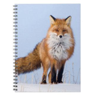 USA, Alaska, North Slope, 1002 Area Notebook
