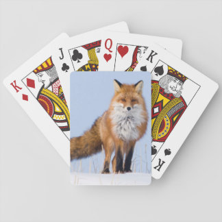 USA, Alaska, North Slope, 1002 Area Playing Cards