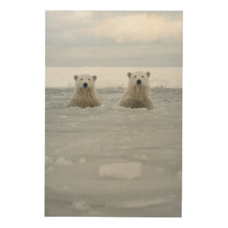 USA, Alaska, North Slope, 1002 Area Wood Canvases