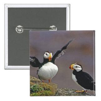 USA, Alaska, Pribilof Islands, St. George 15 Cm Square Badge
