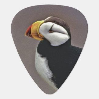 USA, Alaska, Pribilof Islands, St. George Guitar Pick