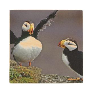 USA, Alaska, Pribilof Islands, St. George Wood Coaster