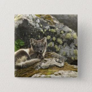 USA, Alaska, Pribilof Islands, St Paul. Blue 15 Cm Square Badge