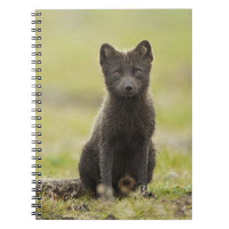 USA, Alaska, Pribilof Islands, St Paul. Blue 4 Notebooks
