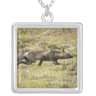 USA. Alaska. Red Fox stalks its prey at Denali Silver Plated Necklace