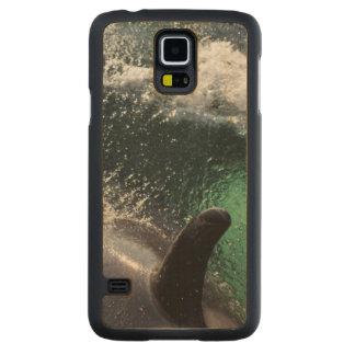 USA, Alaska, Tenakee Springs. Orca Maple Galaxy S5 Slim Case