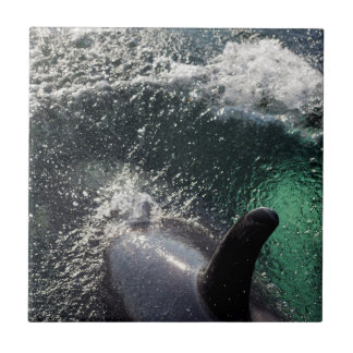 USA, Alaska, Tenakee Springs. Orca Tile