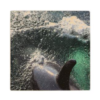 USA, Alaska, Tenakee Springs. Orca Wood Coaster