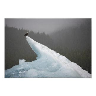 USA, Alaska, Tongass National Forest, Bald Photo Print