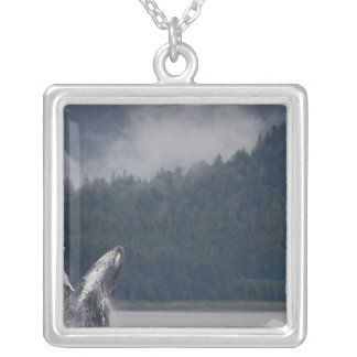 USA, Alaska, Tongass National Forest, Humpback 3 Silver Plated Necklace