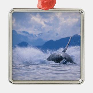 USA, Alaska, Tongass National Forest, Humpback 4 Christmas Ornament
