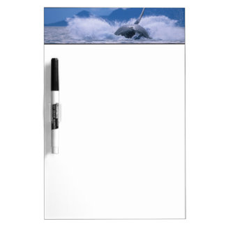 USA, Alaska, Tongass National Forest, Humpback 4 Dry Erase Board