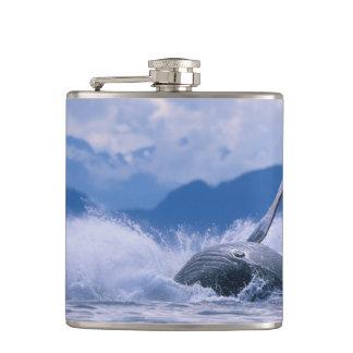 USA, Alaska, Tongass National Forest, Humpback 4 Hip Flask