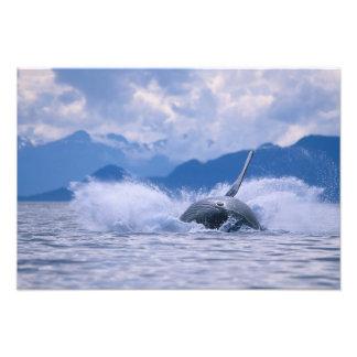 USA, Alaska, Tongass National Forest, Humpback 4 Photo