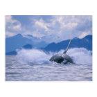 USA, Alaska, Tongass National Forest, Humpback 4 Postcard