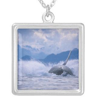 USA, Alaska, Tongass National Forest, Humpback 4 Square Pendant Necklace