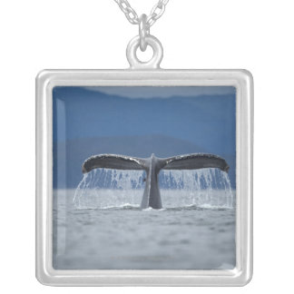 USA, Alaska, Tongass National Forest, Humpback Silver Plated Necklace