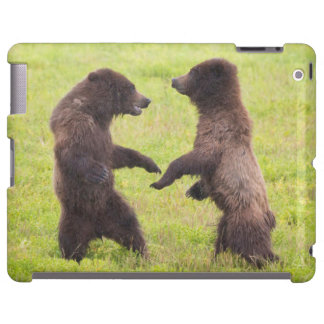 USA, Alaska, Tongass National Forest, Stan Price iPad Case