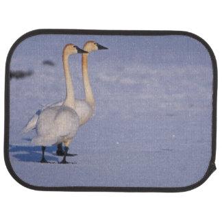 USA, Alaska, whistling swan adults, central Car Mat