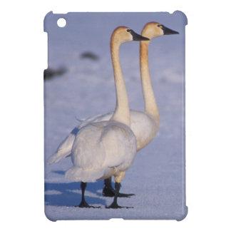 USA, Alaska, whistling swan adults, central iPad Mini Cases