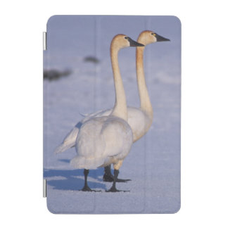 USA, Alaska, whistling swan adults, central iPad Mini Cover