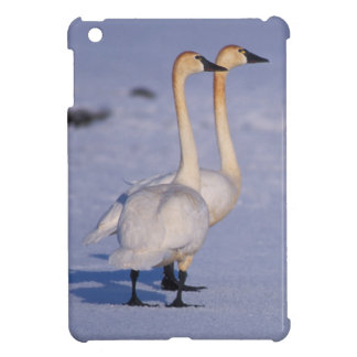 USA, Alaska, whistling swan adults, central iPad Mini Covers