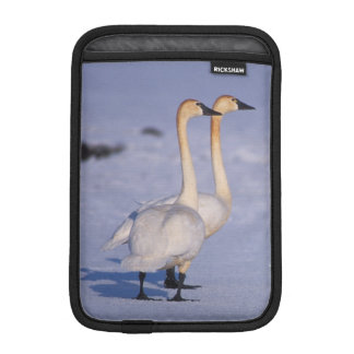 USA, Alaska, whistling swan adults, central iPad Mini Sleeve