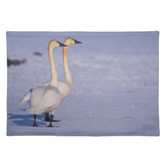 USA, Alaska, whistling swan adults, central Placemat