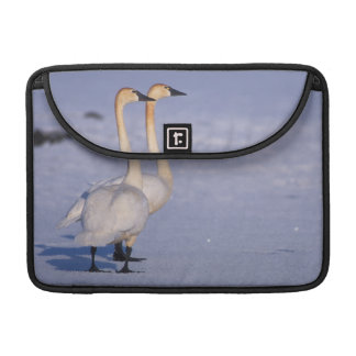 USA, Alaska, whistling swan adults, central Sleeve For MacBooks