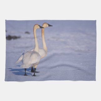 USA, Alaska, whistling swan adults, central Tea Towel