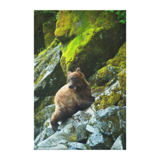 USA, Alaska. Young grizzly bear on rocky slope Canvas Print