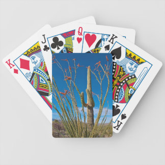 USA, Arizona. Cactus In Saguaro National Park Bicycle Playing Cards