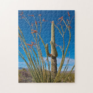 USA, Arizona. Cactus In Saguaro National Park Jigsaw Puzzle