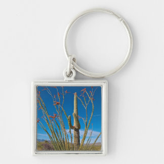 USA, Arizona. Cactus In Saguaro National Park Key Ring