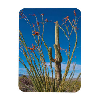 USA, Arizona. Cactus In Saguaro National Park Magnet