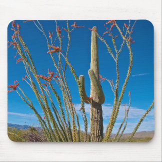 USA, Arizona. Cactus In Saguaro National Park Mouse Mat